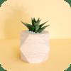 Houseplant Flowerpot Design.png